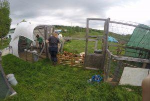 Farmstay Kanada Hühnerstall
