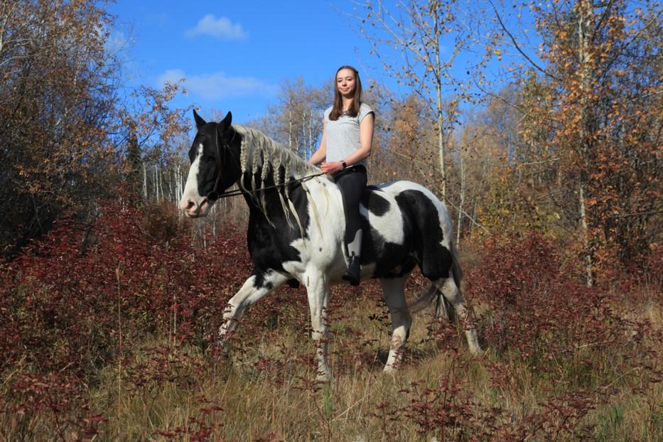 Erfahrungsbericht: Mein Farmstay-Aufenthalt auf einer Pferdefarm in Kanada